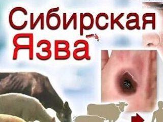 В Дагестане зарегистрировано несколько подтверждённых случаев СИБИРСКОЙ ЯЗВЫ!!!